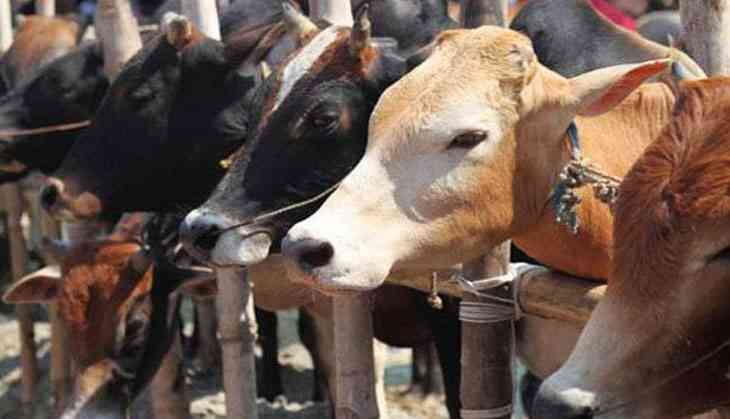 UP govt's bovine bonanza: Upkeep of cattle to be part of CSR now