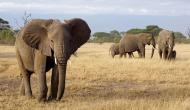 यहां इंसान नहीं हाथी को दी गई थी फांसी, जानिए 104 साल पहले क्यों हुई थी अनोखी सजा