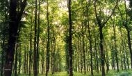 Do passages in the Bible justify cutting down forests?