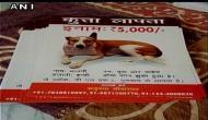 गुरुग्राम: पालतू कुत्ते की किडनैपिंग के बाद मर्डर, पकाकर खा लिया मीट, FIR दर्ज