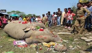 NGT forms team to probe death of 7 elephants in Odisha