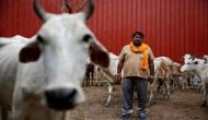 Declare cow the national animal: JD (U) to Centre