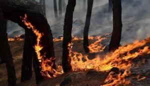 वैष्णो देवी के पास जंगल में लगी भीषण आग, बंद किया गया रास्ता