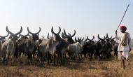 पशु बिक्री पर बैन: क्या मोदी सरकार का फ़ैसला उल्टा पड़ गया है?
