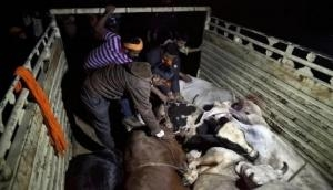 Cattle ban: Cong attacks Centre, says even BJP leaders eat beef