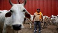 मोदी सरकार को SC से झटका, वध के लिए पशुओं को खरीदने-बेचने पर बैन हटाया