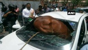 Horse rams into car in Jaipur