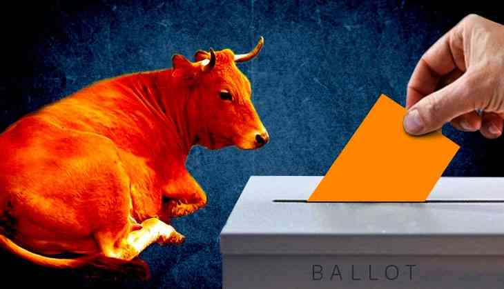 Cow being used as a passive political tool in Modi's backyard Gujarat