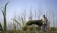 Cabinet approves interest subvention scheme for farmers