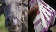 भैंस को चारा खिलाने पर मिलेंगे 25000 रुपये, पढ़े-लिखे होने की जरूरत नहीं