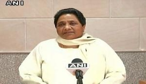 Cow dying of corruption in Govt-owned cow shelter, alleges Mayawati