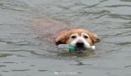 इस कुत्ते के 'पर्यावरण प्रेम' को देखकर आप भी करेंगे सलाम