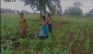 विडंबनाः बैलों की जगह बेटियों से हल चलवाने को मजबूर किसान