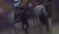 वीडियो: जानिए क्यों दूल्हे को लेकर कुएं में कूद गर्इ घोड़ी?