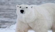 Arctic Animals at threat as US allows oil drilling in Alaska waters