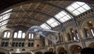 112 years dinosaur replaced by blue whale at London museum