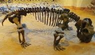 More than 252 million years ago, mammal ancestors became warm-blooded to survive mass extinction