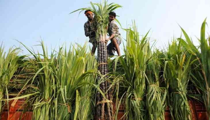 Cane pricing in UP: Yogi caught between Centre's pressure & farmers' demands