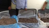 Three persons with Agarwood worth crores arrested in Delhi