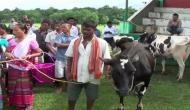 Dairy farming boosts sustainable livelihood in Meghalaya