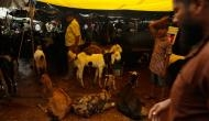 In photos: Not business as usual, but Delhi's Bakra Mandi is ready for Eid