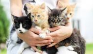 बिल्लियों के लिए इस देश में चलार्इ गर्इ स्पेशल बस...