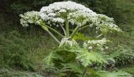 WARNING: One touch of this plant can take away your eye sight and your life