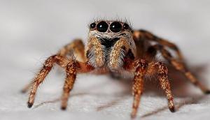 New spider species named after Leonardo DiCaprio, Barack Obama