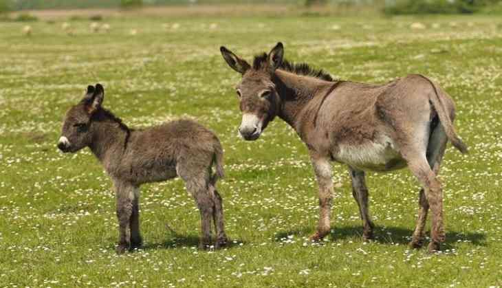 Police arrest donkeys for eating 'expensive plants'