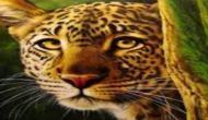 जानिए मानेसर प्लांट मे तेंदुए की एंट्री ने कैसे रोक दिए मारुति कार के चक्के