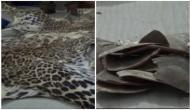 Leopard skin, pangolin scale seiezed in Bandipora, two arrested