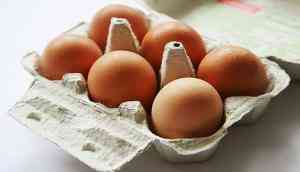 Eggshell-derived nanoparticles can be used for drug delivery