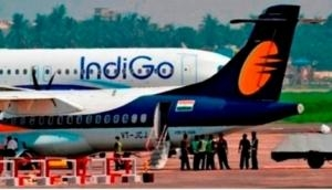 Wild boar hits Indigo flight during take-off, Airline issues statement