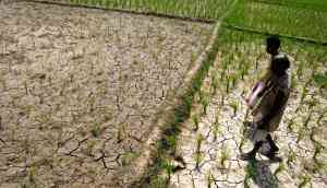 The rising number of farmer suicides in Odisha indicates a looming crisis