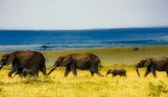 Witness Mother Nature in its magnificence on African safari