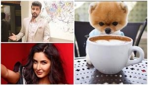 Funny, but this dog is more famous than our Bollywood stars like Arjun Kapoor, Katrina Kaif on Instagram