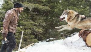 भेड़ियों ने सलमान पर किया अटैक, देखें वीडियो