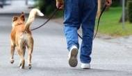 इंसानों को ही नहीं कुत्तों को भी होता है कैंसर, 50 फीसदी कुत्ते बन जाते हैं इसका शिकार