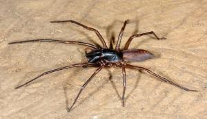 A spider called Bob Marley