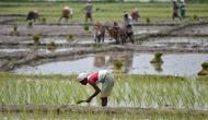 Modi govt hikes MSP for Kharif crops. But this is unlikely to help farmers