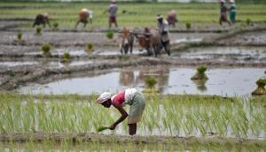 Budget 2019: किसानों को राहत देने के लिए फसल बीमा योजना में होगा बदलाव?