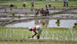 UP: Farmers in distress as heavy rainfall causes crop damage in Gorakhpur