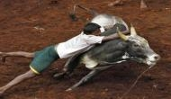 Jallikattu: Animals welfare board issues guidelines for conduct of traditional spectacle