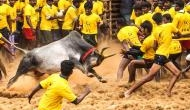 Taking the bull by the horns--it is Jallikattu again!