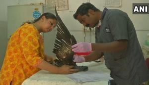 Kite festival: Gujarat govt. starts first-aid initiative for injured birds