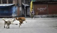 7-year-old mauled to death by stray dogs in Himachal
