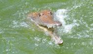 Odisha: Alert farmer survives crocodile attack in Kendrapara district