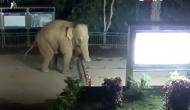 हाथी ने घूमने के लिए बड़ी चालाकी से पार किया बॉर्डर, CCTV में कैद हुआ वीडियो वायरल