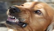 FIR against owner after dog bites UNESCO representative