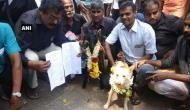 Divorce petition filed against dog, goat marriage